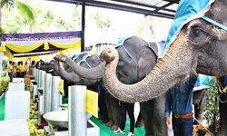 """สวนนงนุชพัทยานำ """"ช้างแสนรู้ 9 เชือก"""" รวมหล่อเทียนพรรษา 9 วัด 9 ต้นสืบสานประเพณีไทย"""