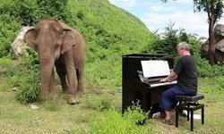 ชายอังกฤษยกเปียโนไปเล่นกลางป่า บำบัดช้างไทยตาบอด