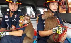 น่าเอ็นดู ลิงจ๋อยิ้มแฉ่งหลังเจ้าหน้าที่เข้าช่วย