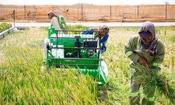 ล้ำไปอีกขั้น นักวิทย์ฯ จีนพัฒนาข้าวจนปลูกในทะเลทรายได้สำเร็จ (มีคลิป)