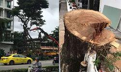 ชาวบ้านโวย ! กทม.ตัดต้นไม้อายุกว่า 50 ปี ทิ้ง หลังรากไม้ทำลายฐานตึกเสียหาย