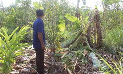 ใกล้ปะทุ สงครามคนชนช้าง-ร้องขอกองหนุนรัฐ หลังช้างป่ารวมโขลงใหญ่ออกทำลายที่ดินทำกิน