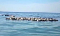 พบเต่าหญ้าตายปริศนากว่า 300 ตัวในเม็กซิโก จนท.เร่งหาสาเหตุ