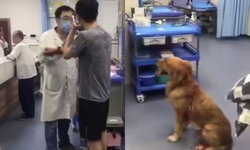 ชายจีนหัวร้อน โวยวาย-ขู่ฆ่าหมอห้องฉุกเฉิน ฉุนไม่ยอมรักษาหมา