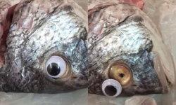 """ไม่เนียน! พ่อค้าคูเวต แอบติด """"ตาปลอม"""" ทับตาปลา หลอกลูกค้าว่าปลาสด"""
