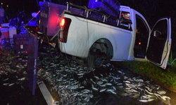 ปลาสดเกลื่อนถนน! สองสามีภรรยาบรรทุกปลาเต็มลำรถ ล้อหลังหลุดเสียหลักตกไหล่ทาง
