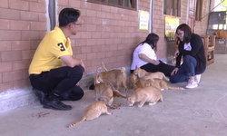 รับเลี้ยงเหมียวที! ปศ.สกลนคร ออกฉีดวัคซีนหมา-แมว ประกาศใครสนใจอุปการะติดต่อด่วน