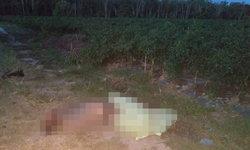 สลด! ช้างป่าดงใหญ่ไล่ทำร้าย 2 ผัวเมียเฝ้าสวนพริก เมียวิ่งหนีไม่ทันถูกเหยียบตายคาที่