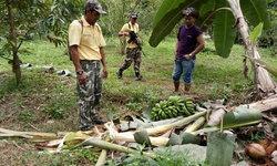 กลับคืนบ้าน ชุดเฝ้าระวังเร่งผลักดันช้างป่าคืนถิ่น หลังออกหากินทำลายพืชผลเกษตรชาวบ้าน