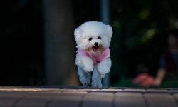 เตือนไม่ฟัง หญิงจีนจูงสุนัขไม่ใส่สายจูง ตำรวจยึดเจ้าตูบ-ปรับหลักหมื่น