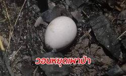 """ภาพสลด """"แม่นกยูง"""" ไม่ยอมหนีไฟป่า กกไข่ปกป้องลูกจนตัวตาย สัตว์ป่าไหม้เกรียมเกลื่อน"""