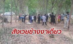 หนุ่มปั่นจักรยานฝ่าสวนยาง โดนช้างป่ากระทืบเหยียบร่างเสียชีวิตสยอง