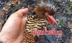 """หนึ่งในสัตว์ผู้โชคดี """"นกกระเต็นลาย"""" รอดไฟป่าเชียงดาว ปลอดภัยในอุ้งมือผู้พิทักษ์"""