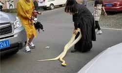 สะดุ้งทั้งถนน! สาวจีนนึกพิเรนทร์ พางูหลาม 2 เมตร พาดคอออกมาเดินเล่น