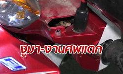 งานศพกระเจิง! งูเห่าเลื้อยฝ่าวงสวด-หนีซ่อนรถสองล้อ ผู้คนส่องป้ายทะเบียน