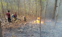 ตะลึง ไฟป่าประทุกว่า 300 จุดในวันเดียว คาดสาเหตุมาจากการเผาไร่ของราษฎร