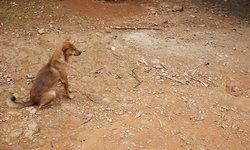 สาวนอร์เวย์เสียชีวิตน่าเศร้า เพราะช่วยชีวิตลูกหมาไว้ ทำติดเชื้อพิษสุนัขบ้า
