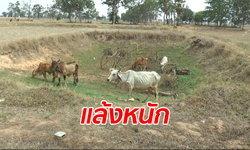 เปิดศึกแย่งน้ำเริ่มรุนแรง ถึงขั้นโรยสารเคมีรอบสระ สกัดวัวควายคนอื่นลงไปกิน