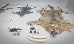 """""""วันกษัตริย์"""" ถูกค้านประกันตัว คดีซุกซากสัตว์ป่าสงวน หิ้วตัวเข้าเรือนจำ"""