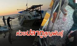 """กรมประมงเผย """"ปลาทูอ่าวไทย"""" ลดฮวบ เร่งมาตรการควบคุม หวั่นสูญพันธุ์"""