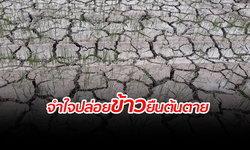 ชาวนาเศร้า! จำใจปล่อยต้นข้าวในนาแห้งตาย หลังประสบภัยแล้ง-ฝนทิ้งช่วง