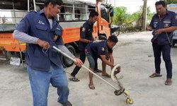 งูเหลือมตัวยาวกว่า 4 เมตร เลื้อยระทึกบนสายไฟล่าเหยื่อบนที่สูง