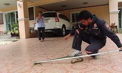 งูเหลือมยาว 2 เมตร เลื้อยบนต้นไม้เหนือศาลพระภูมิ แม่ค้าผลไม้ยืนลุ้นกู้ภัยจับ