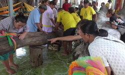 คอหวยแน่นขนัดวัด หลังชาวบ้านรวมใจอัญเชิญต้นตะเคียนยักษ์ขึ้นจากแม่น้ำน้อย