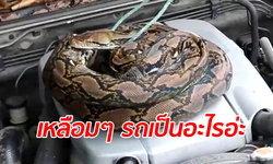 """รถจอดนานสตาร์ทไม่ติด เปิดฝากระโปรงมาช็อก """"งูเหลือม"""" ยาว 3 เมตรนอนขดสบายใจ"""