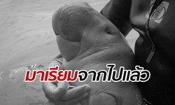 """""""มาเรียม"""" พะยูนน้อยกำพร้าขวัญใจคนไทย สิ้นใจจากไปอย่างสงบแล้ว"""