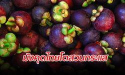 """ต่างชาติชื่นชอบ """"มังคุดไทย"""" ครึ่งปีแรกส่งออกมูลค่า 325 ล้านเหรียญสหรัฐ"""