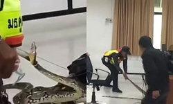 ชมคลิประทึก! งูเหลือมโผล่กลางห้องเรียน อาจารย์-นักศึกษาหนีกระเจิง