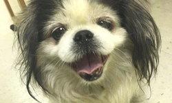 หมาพันธุ์อึด! รอดตายเหตุแก๊สระเบิด-หายไป 1 ปี กลับมาเจอเจ้าของอีกครั้ง
