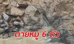 สลด ช้างป่าเขาใหญ่ 8 ตัว พลัดตกน้ำตกเหวนรก ตาย 6 รอด 2