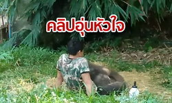 """คลิปอุ่นหัวใจดังไกลทั่วโลก เมื่อช้างน้อย """"ชบาแก้ว"""" อ้อนขอนอนตักเจ้าหน้าที่ (ชมคลิป)"""