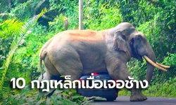 """อุทยานฯเขาใหญ่ ย้ำกฎเหล็ก 10 ข้อ เมื่อเจอช้างป่า หลังเหตุ """"พี่ดื้อ"""" ขย่มรถยุบ"""