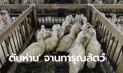 นิวยอร์กแบนฟัวกราส์ ปี 65 ห้ามร้านอาหารขายเมนูตับห่านสุดทรมานสัตว์