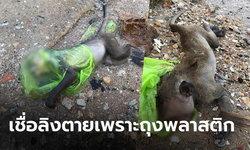 สะเทือนใจ! หนุ่มโพสต์ภาพลูกลิงลอยตายในทะเล หัวมีถุงพลาสติกครอบ