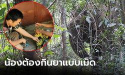 เปิดภารกิจ จนท.ให้ยาปฏิชีวนะแบบเม็ดแก่ช้างป่าทับลานที่ถูกทำร้าย