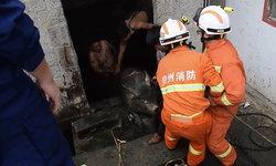 สุดชุลมุน นักดับเพลิงจีนกระโดดลงบ่อเกรอะ ช่วยชีวิตเจ้าหมูตัวกลม (มีคลิป)