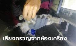 ลูกแมวหวิดดับ ซุกตัวในห้องเครื่อง เคราะห์ดี! คนขับได้ยินเสียง ขณะติดไฟแดง แจ้งคนช่วยทัน
