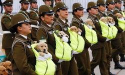 น่ารักขโมยซีน! น้องใหม่หน่วยสุนัขตำรวจชิลี ร่วมพิธีสวนสนาม