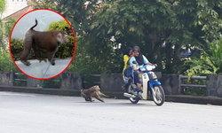 ลิงหลุดเดินกลางถนน! ชาวบ้านเข้าช่วย แต่ลิงกระโดดกัดหลบหนี กู้ภัยจับกันวุ่น
