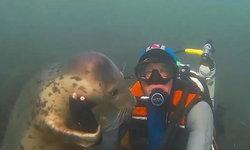 เล่นด้วยสิมนุษย์...แมวน้ำเกาะติดนักดำน้ำ ไม่ยอมให้ว่ายไปไหน