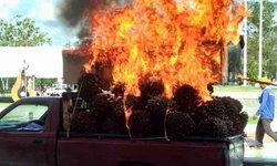 """""""ม็อบสวนปาล์ม"""" ประท้วง-เผาโลงหน้าศาลากลาง หลังราคาปาล์มตกต่ำอย่างหนักในรอบ 20 ปี"""
