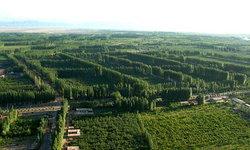เขียวชอุ่ม ผืนป่ากลางทะเลทราย ปาฏิหาริย์จากความพยายาม 32 ปีของจีน