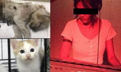 """กลุ่มคนรักแมวแฉ! ดีเจสาวขอรับไปเลี้ยง 27 ตัว คาดเอาไป """"ฆ่า"""" ถ่ายคลิปแลกบิทคอยน์"""