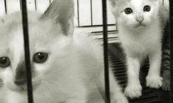สัตวแพทย์ชี้ชัด ชันสูตรแมวตายผิดธรรมชาติ หางและอวัยวะหายไป