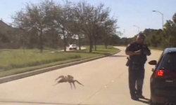 """โซเชียลสุดสะพรึง! จับภาพนาทีสยอง """"แมงมุมยักษ์"""" ค่อยๆ จู่โจมคุณตำรวจ"""