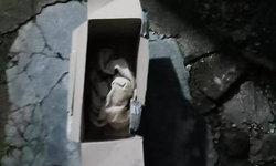 หมาเห่าช่วยชีวิต ทารกคลอดก่อนกำหนดถูกทิ้งยัดกล่อง เปิดดูยังมีลมหายใจ